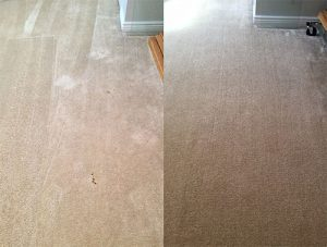 Carpet Cleaning Pet Stains Before and After