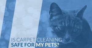 is carpet cleaning safe for pets?