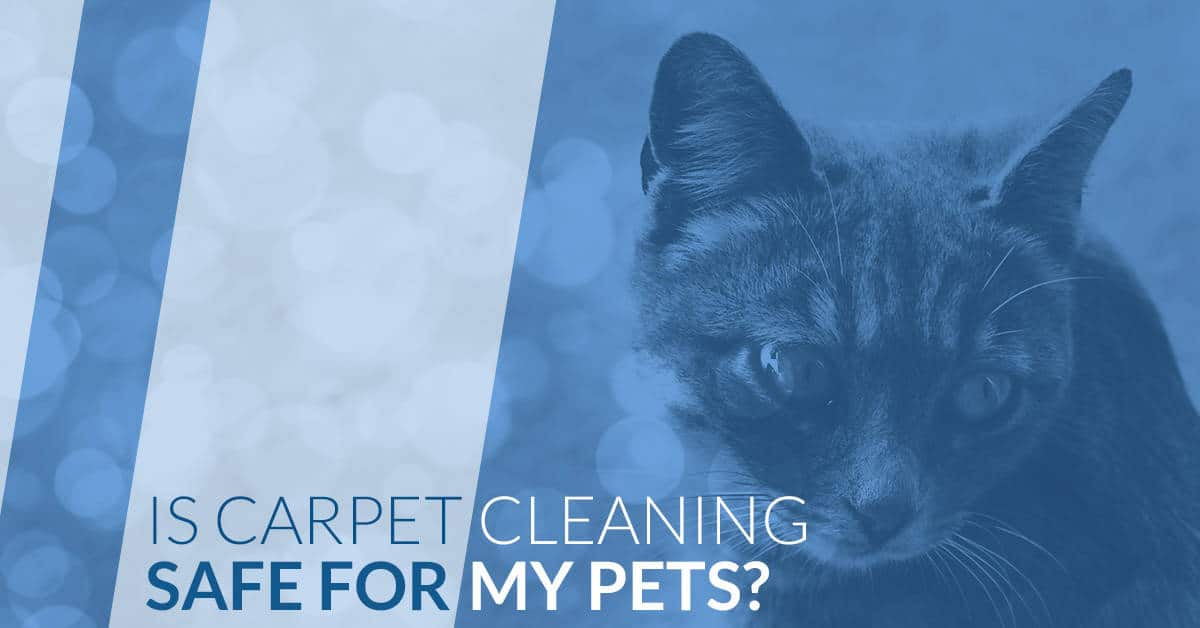Is carpet cleaning safe for my pets?