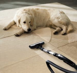 dog lying next to vacuum cleaner on cream pattered rug