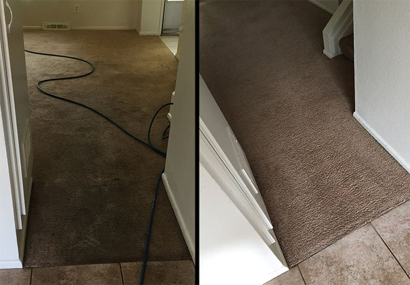 Before and after pet stains and odor carpet cleaning