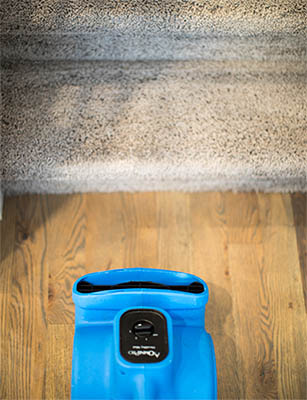 Blue fan blowing towards a flight of carpeted stairs to help dry the carpet after carpet cleaning