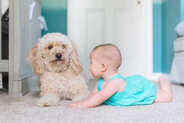 little girl and dog on Stapleton carpet