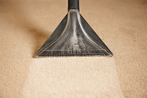 carpet extractor removing water from carpet