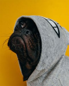 """Dog in hooded sweat shirt """"pet urine specialist"""""""