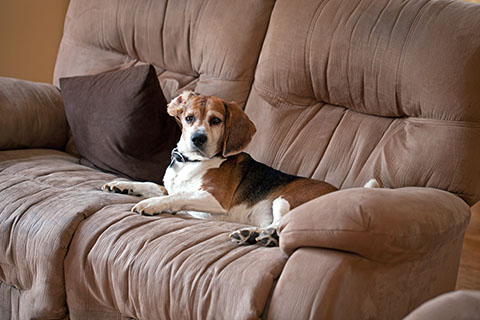 dog sitting on brown microfiber chair