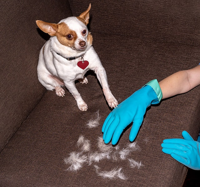 Using a rubber glove to pick up pet hair